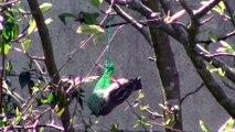 Oiseaux de nos jardins - 1ère partie