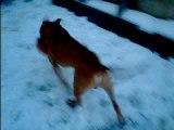 jack ds la neige  2