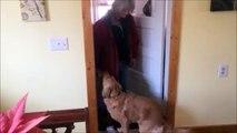 Ce chien refuse les bisous de sa maitresses car elle sent de la bouche
