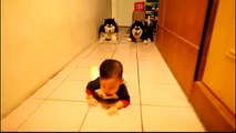 Stava filmando suo figlio mentre gattonava per la prima volta. Non si aspettava che i cani avrebbero fatto QUESTO