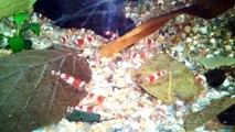 - 25 Liter Nano Aquarium - 30 Crystal Red K4 Garnelen -