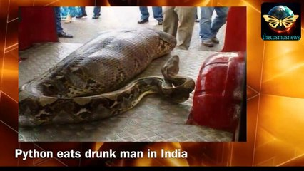 Giant Anaconda Eats Alive Man In India