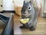 белочка кушает лимон