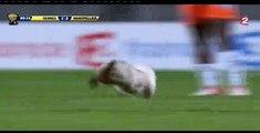 2013, en demi-finale de Coupe de France, un chat se joint aux joueurs de Montpellier et Rennes.