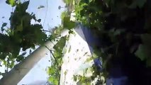 Un crash d'avion transportant 17 parachutistes filmé de l'intérieur