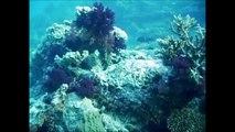 Plongée en Egypte - Mer Rouge - Croisière Nord - Fasma Mahmoudate - 27/11/2007