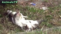 Cute Mom Cat Playing With Her Kitten - Homeless Cat Family