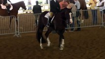 2015 05 22 Abby's Walk Trot Hunt Seat Equitation 10 and Under
