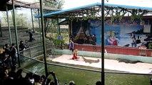 中国大连 China Dalian & NE Sightseeing Crocodile Show  trips. 28 Sept to 7 Oct 2010 Video 62