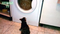 Crazy Funny Cats vs Washing Machines - Imaginary Enemy of Cats Compilation 2015