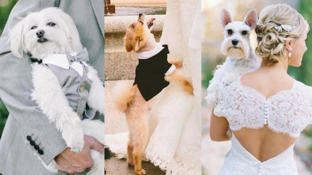 Pets in Weddings: The Most Epic Displays of Puppy Love