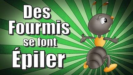 Pour la science, des fourmis se font épiler !