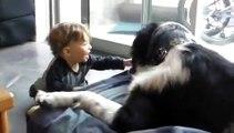 Ce bປé rigole sans s arrê en jouant avec un é chien