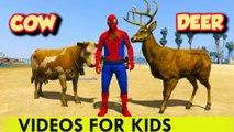 SPIDERMAN ET ANIMAUX Cartoon pour Enfants & Comptines Chansons pour enfants