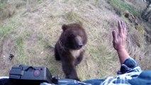 Un bébé ours Grizzly orphelin joue avec ce dresseur et apprend à vivre
