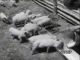 pkf  polska kronika filmowa 1954 - 24 - rekordzistaka-dokument