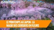 Le printemps au Japon : la magie des cerisiers en fleurs