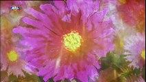 Genérico Rainha das Flores (SIC)