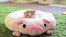 Unduh 61+  Gambar Kucing Anggora Lucu Dan Imut Banget Paling Baru Gratis