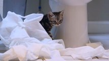 Adorable kitten discovers the joy of playing with toilet paper