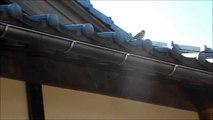 生き物・鳥 2羽のスズメ 2 sparrows