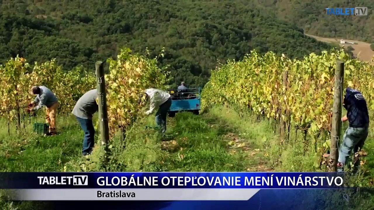 Zmena klímy ovplyvňuje vinohradníctvo v SR pozitívne aj negatívne