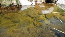 Day 27 PCT 2015 - Blue Gills in Deep Creek, San Bernardino