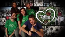 Amores Perros y Otros Amores 2016- Tierra de lobos, Belga Malinois