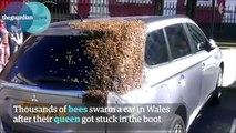 La réaction des abeilles qui attendent leur Reine est magnifique et insolite !