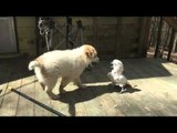 Puppy and Bird Partake in Cutest Game of Chase Ever