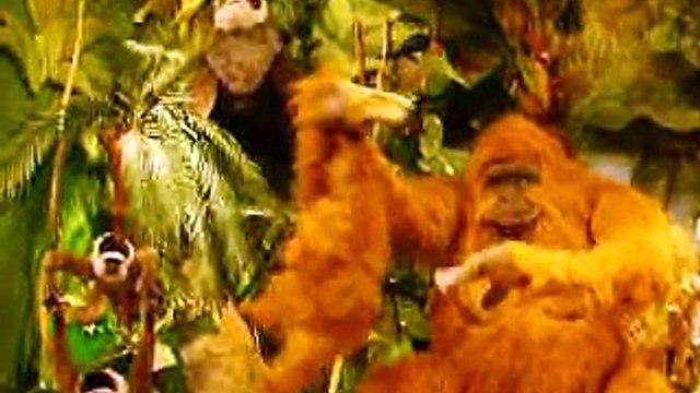 Hamleys jungle