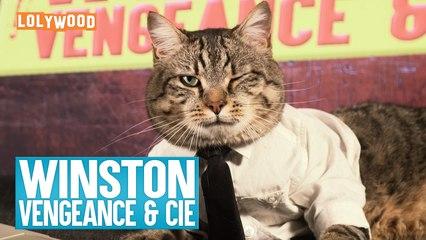 LOLYWOOD - Winston vengeance & Cie
