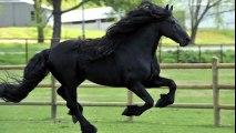 Il a été élu « le plus beau cheval du monde » et vous allez tout de suite comprendre pourquoi !