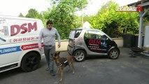 Un plombier dresse son chien pour détecter les fuites de gaz