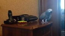 Perroquet VS chien : l'oiseau n'est pas commode!