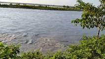 River Sindh, Indus river