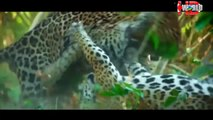 CRAZIEST Animal Fights Caught On Camera | Biggest wild animal fights