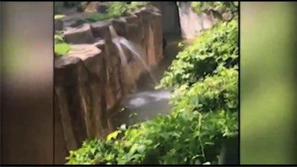 Gorilla grabs child who's fallen into habitat at Cincinnati Zoo