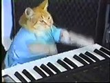 Le chat qui joue du piano