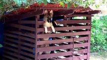 Cute Dogs and Puppies Barking Compilation 2014 NEW HD