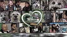 Amores Perros y Otros Amores - Desafio de la pipeta