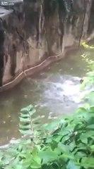 Gorilla shot dead at Cincinnati ZOO to save child
