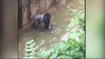Boy was traped in gorilla cage Gorilla was killed with many fire to free child