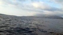 Pazin na moru Tohatsu 25, Delphin 350 Hille Cres Lubenice - Martinščica