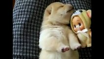 Ce que fait ce mignon chiot en plein milieu de son sommeil est trop mimi. Regardez !