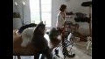 Des chats Maine Coon à La Rochefoucauld