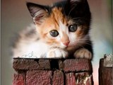 #Cute #Cats and #Kittens #funny #meowing #video #Compilation Cats Kitten doing #funny things 521