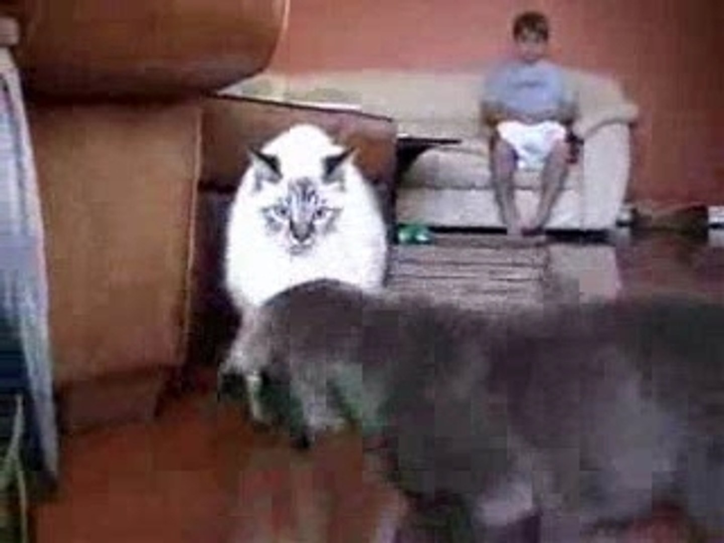 Cat Punched Dog!
