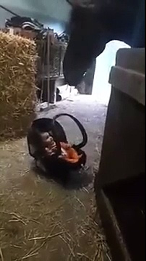 Horse Rocking Baby Video Dailymotion