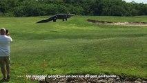 Un alligator géant sur un terrain de golf en Floride